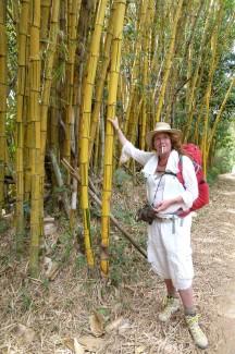 bamboo, tosca niterink, caminho da fe
