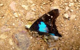 butterfly, caminho da fe