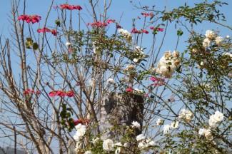 caminho da fe, bloemen