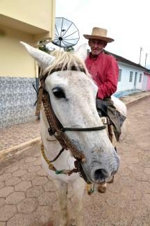 caminho da fe, horse