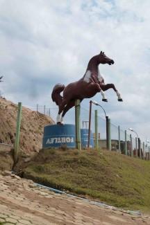 caminho da fe, paard