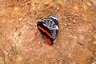 caminho da fe , vlinder