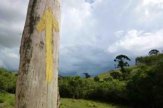 caminho da fe, yellow arrow