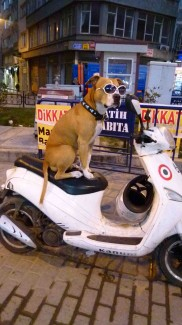 hond istanbul, cAnitaJanssen