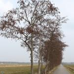 koninklijke weg, ©anitajanssen